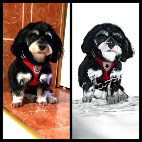 Állatos pólók - házi kedvencek - kutya. Fényképből rajz.